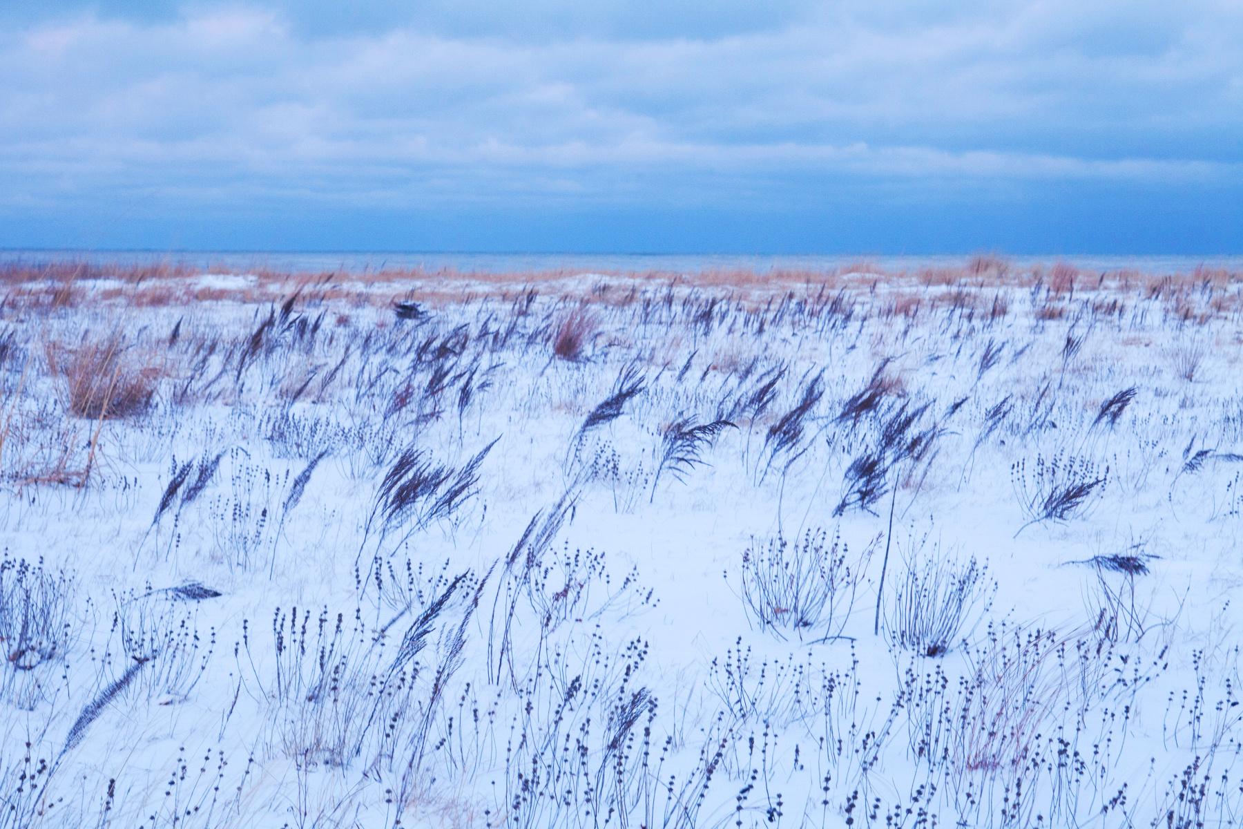 Winter Landscape, Chicago