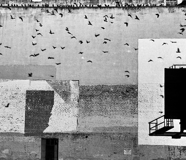 The Birds #2, San Francisco