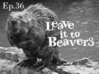 April, 2017: - Jeff is featured as a guest for NHPR's Outside/In Radio podcast, to discuss beaver trapping in New Hampshire.The show also discusses the great debate about whether