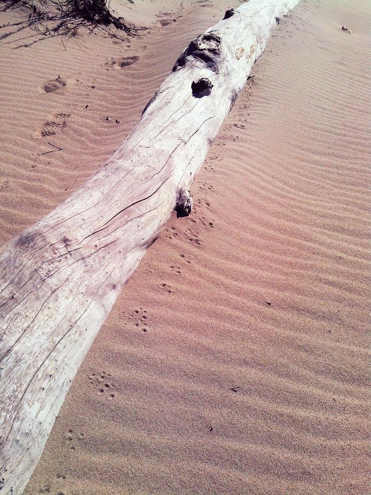 Mouse tracks flushed from alongside drift log.