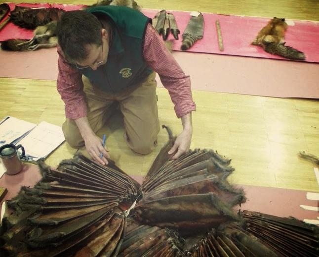 Vermont biologist inspects muskrat pelts. ( Image copyright    Northern Woodlands   . )
