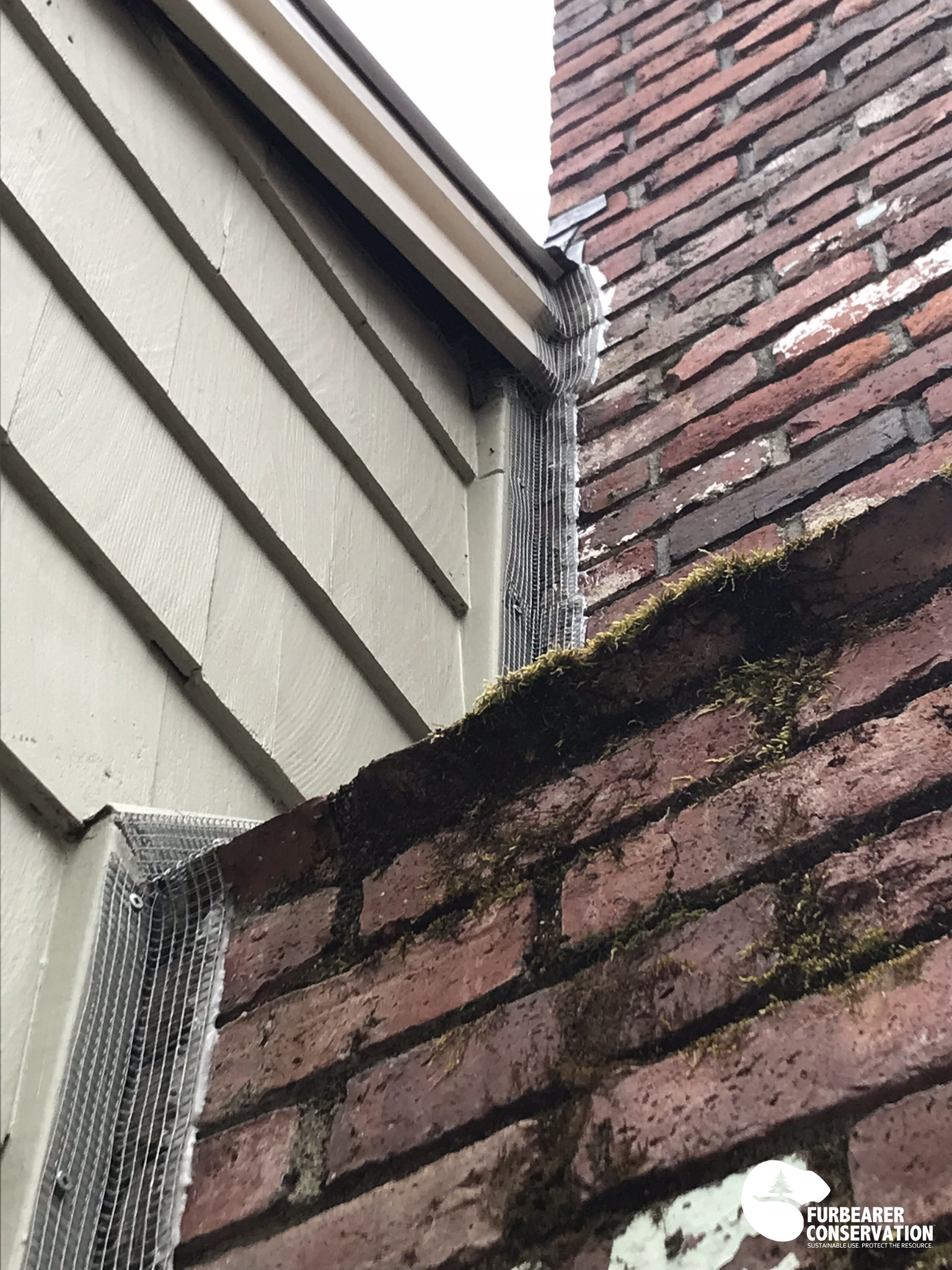 An example of exclusion techniques for squirrels, bats, and mice. Gaps sealed along a chimney using adhesives and steel screening.