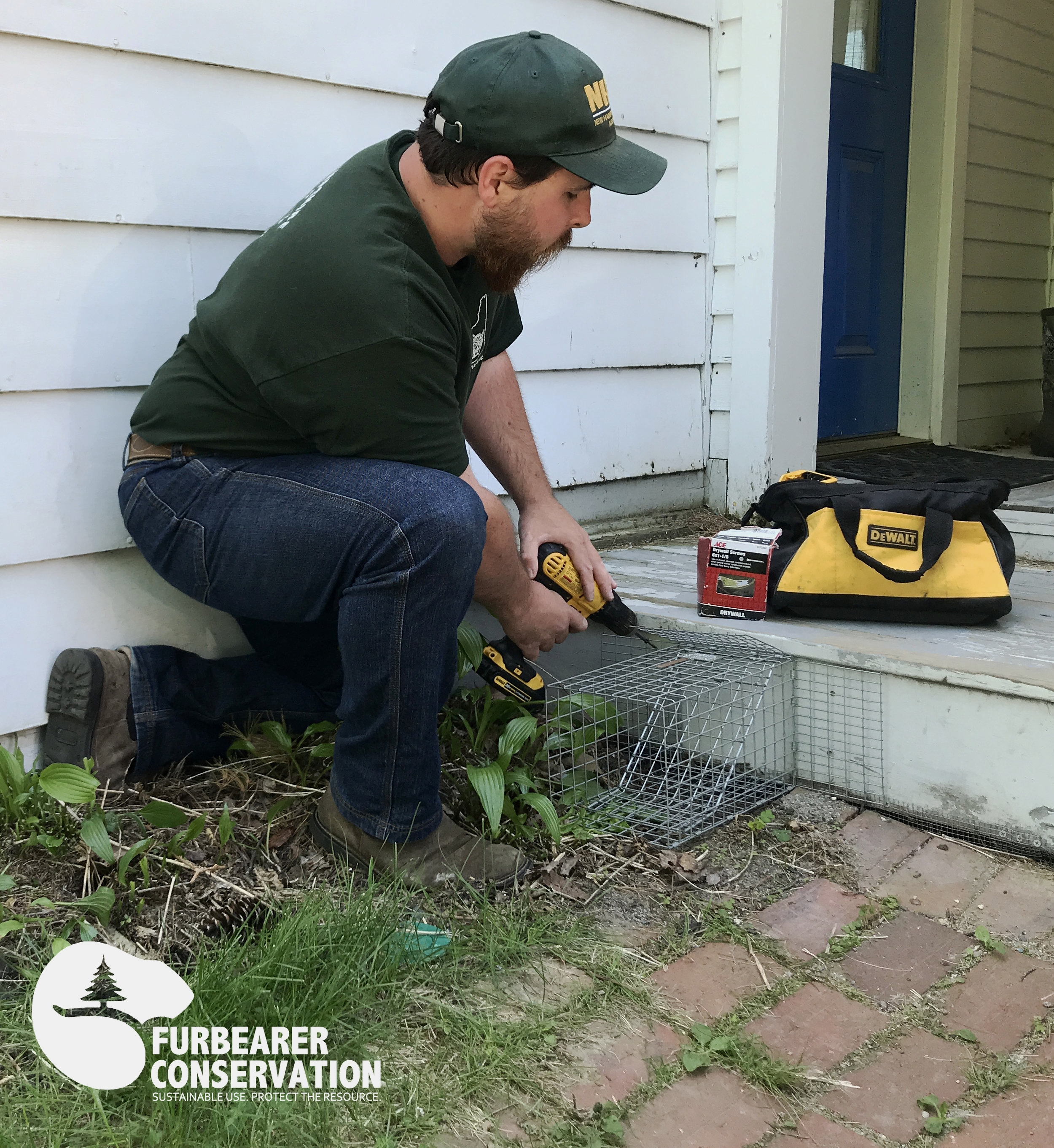 The author repositioning a One Way Exit Device for skunks living under a porch. The beauty of such a service allows for the eviction of animals from structures, without the need for relocation.