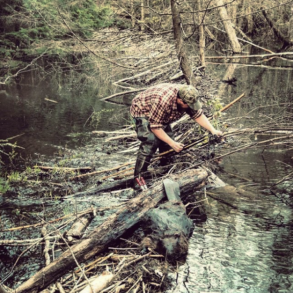 The author removes a beaver after a dam flooded a logging access road in rural New Hampshire. (Photo | copyright  Furbearer Conservation )