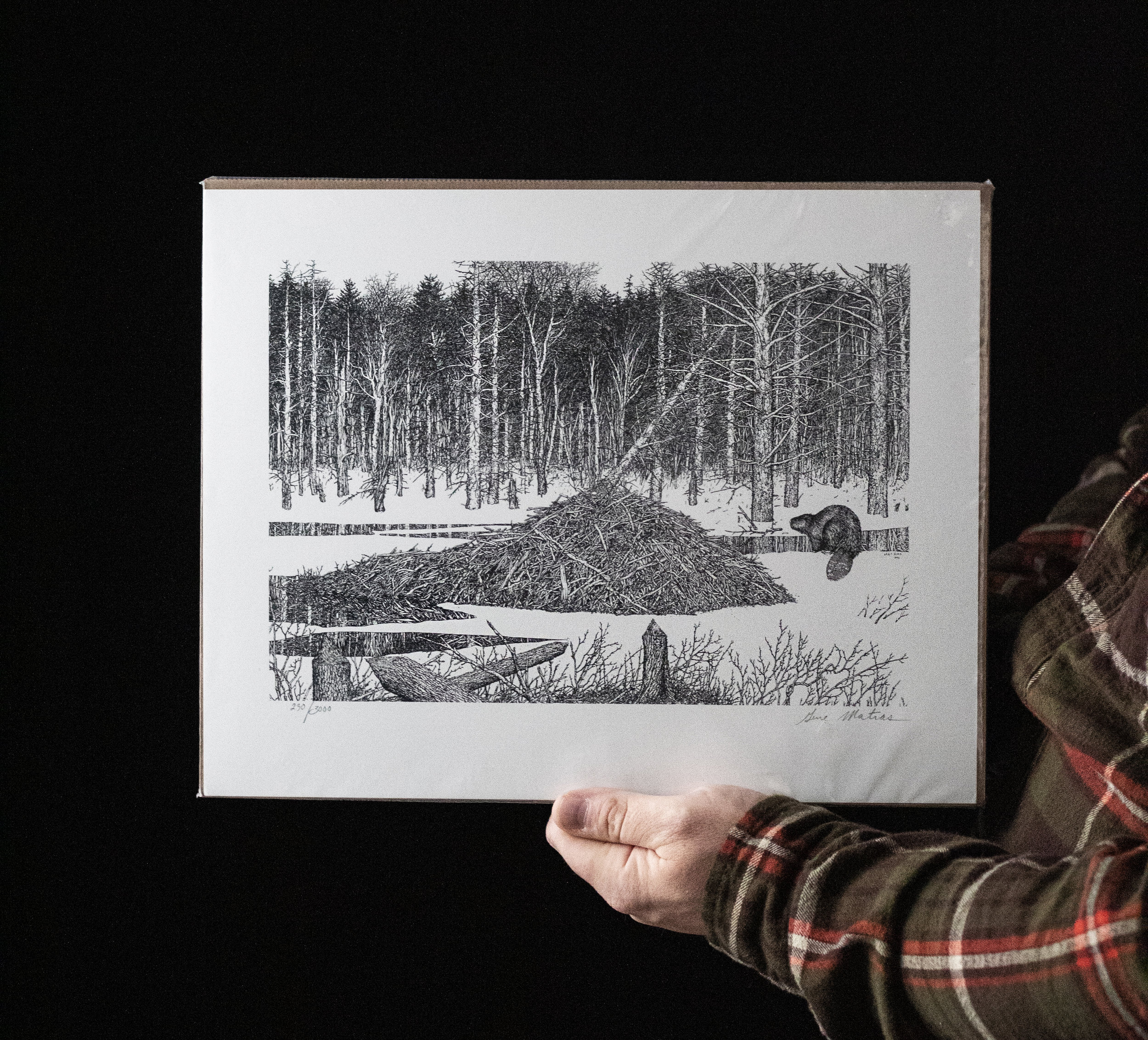 """Beaver Pen & Ink"" by Gene Matras, currently unframed. (Photo | Furbearer Conservation)"