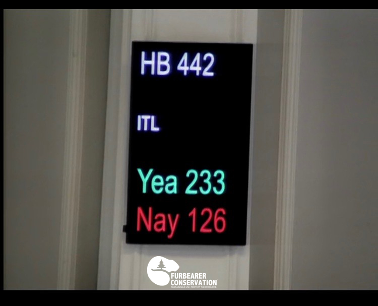 """The final verdict on HB442 was a vote by the NH House legislature to render the bill """"Inexpedient to Legislate"""". (Photo   Furbearer Conservation)"""