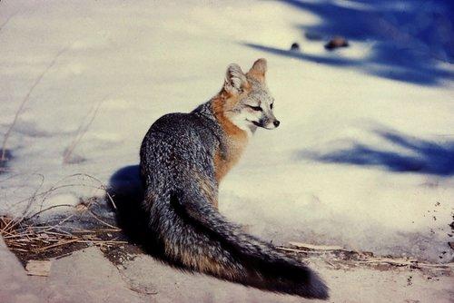 fox-1494095226PnT.jpg