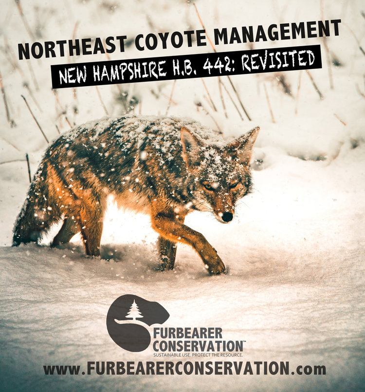 NH H.B. 442 - Get the full run-down on New Hampshire's House Bill 442, relative to coyote hunting; which was submitted to the state's House of Representatives in January of 2019. Read More