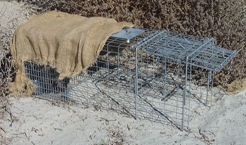 Cage_trap.jpg