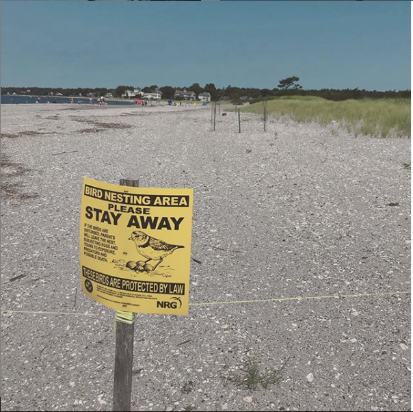 Signage, rope, and fencing is placed upon a stretch of beach in Connecticut to protect nesting shore birds. (Photo | Furbearer Conservation)