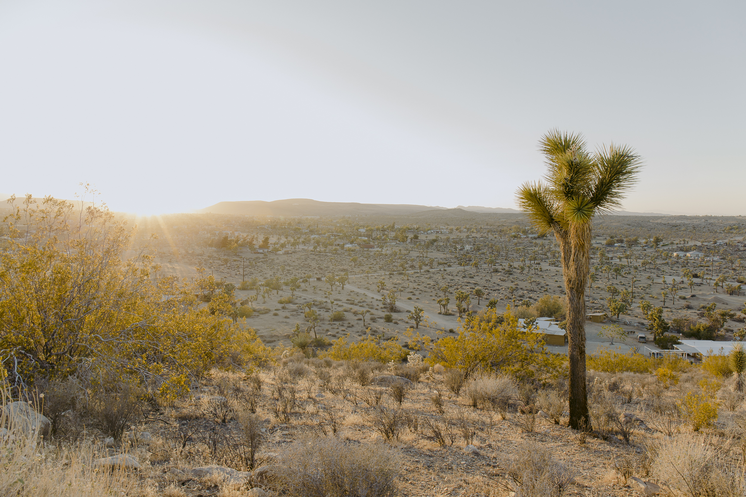 Female Not Factory - Joshua Tree.JPG