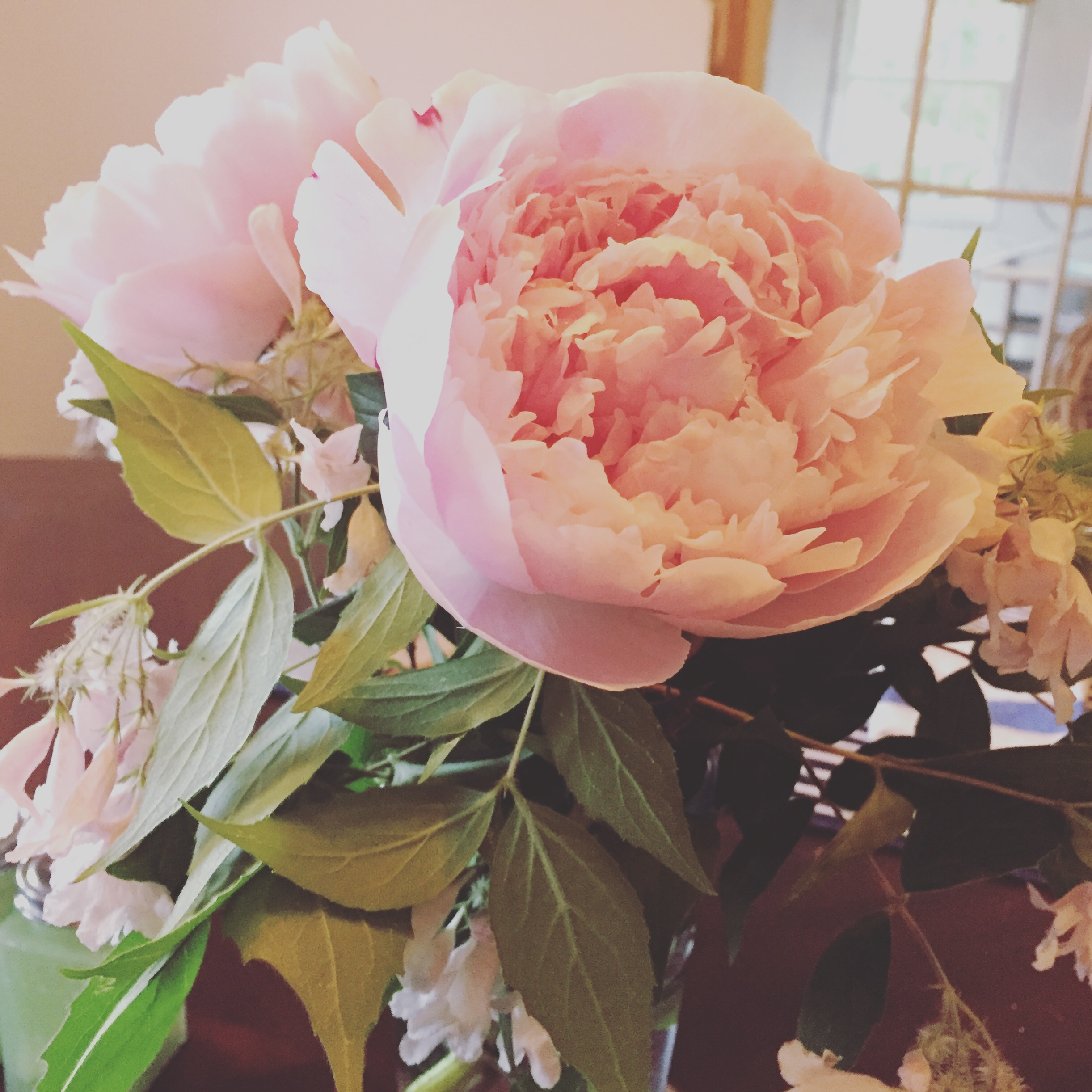 Peonies from our very own yard!