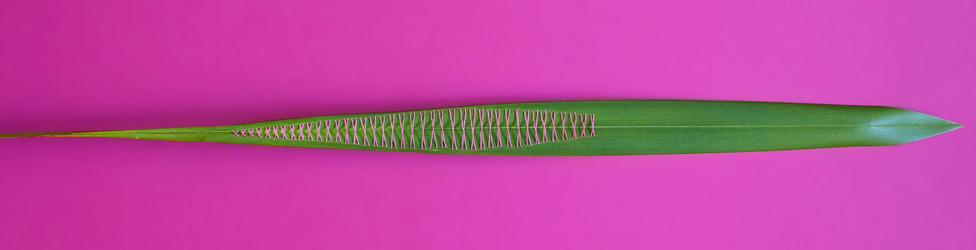 Pink_Intervention_Serie#2.jpg