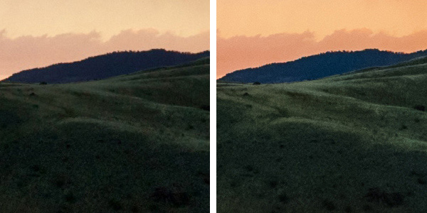 Crop Detail from Montana