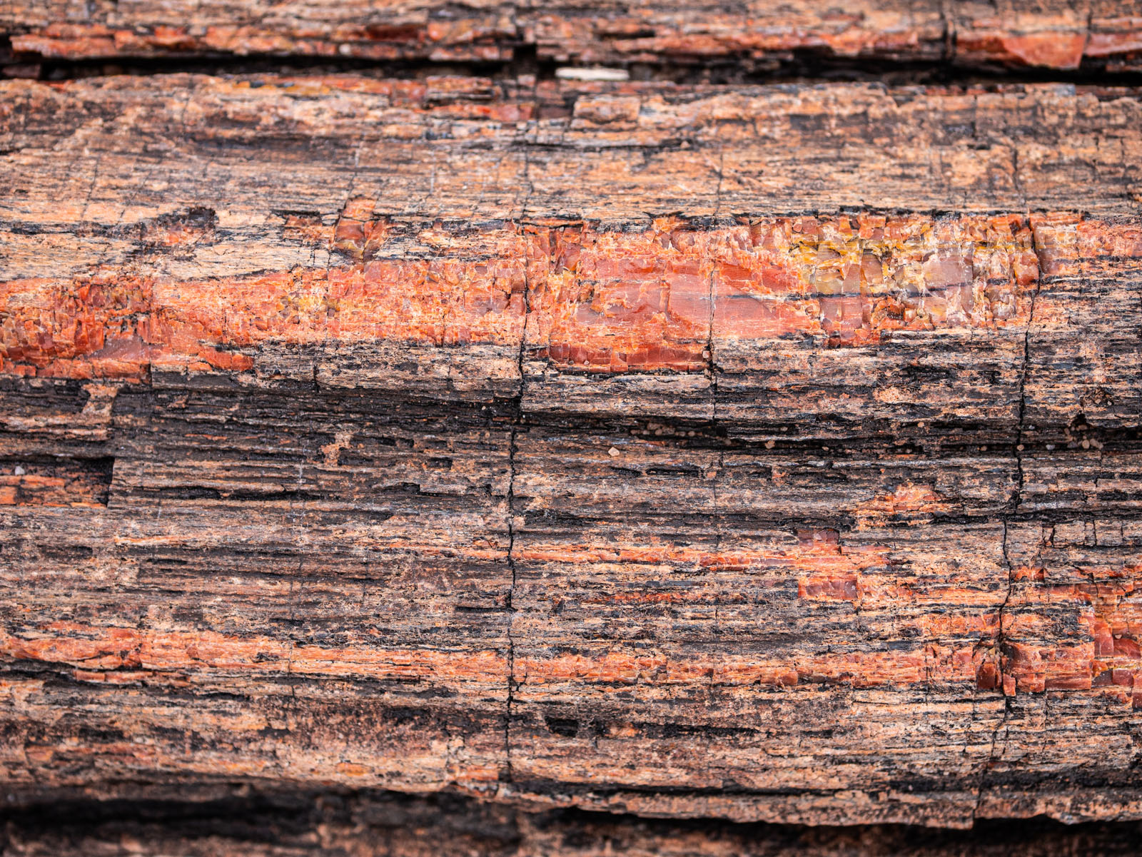 CO_Vacationmoon_PetrifiedWoodMacros-1010501.jpg