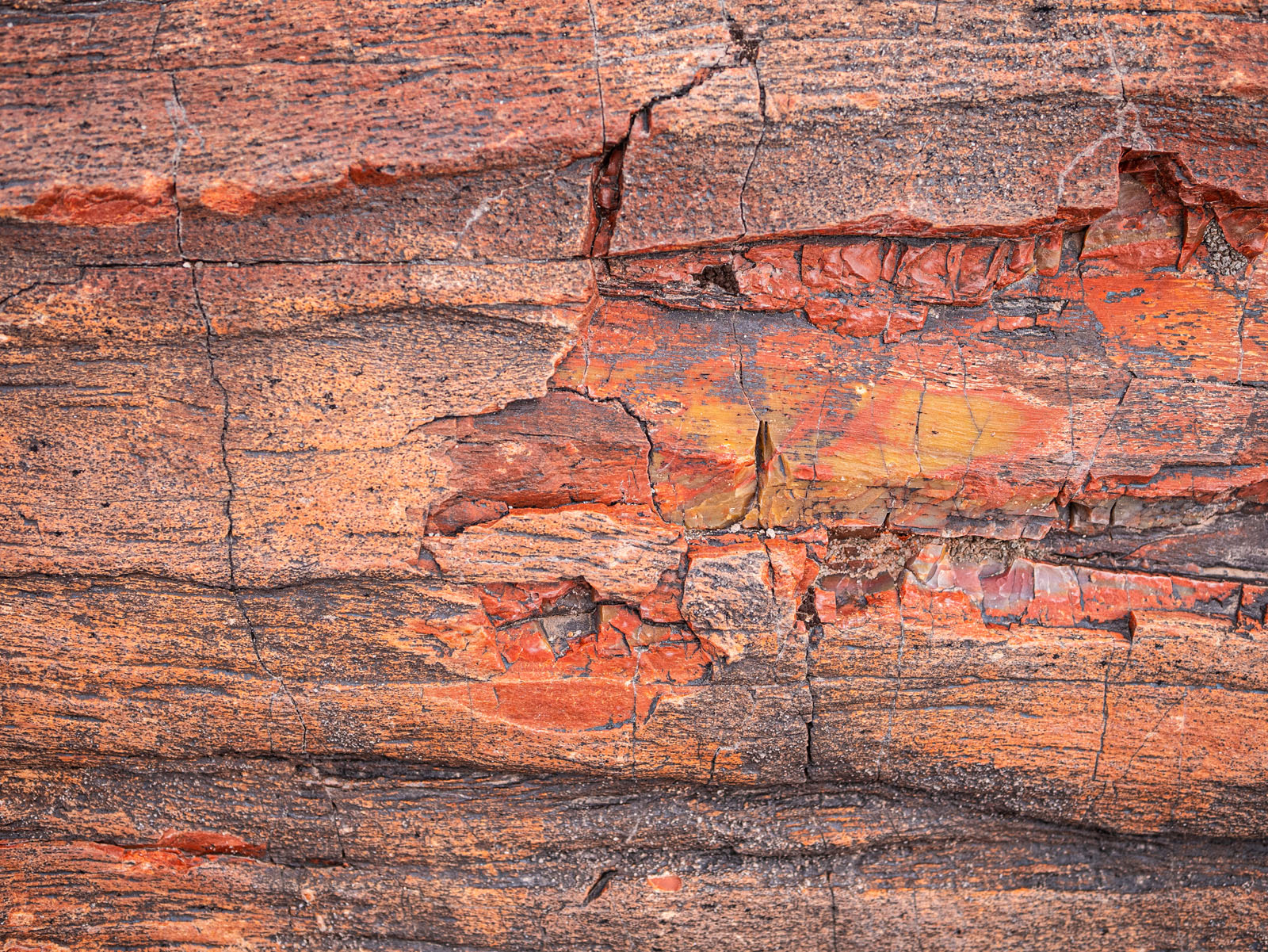 CO_Vacationmoon_PetrifiedWoodMacros-1010491.jpg