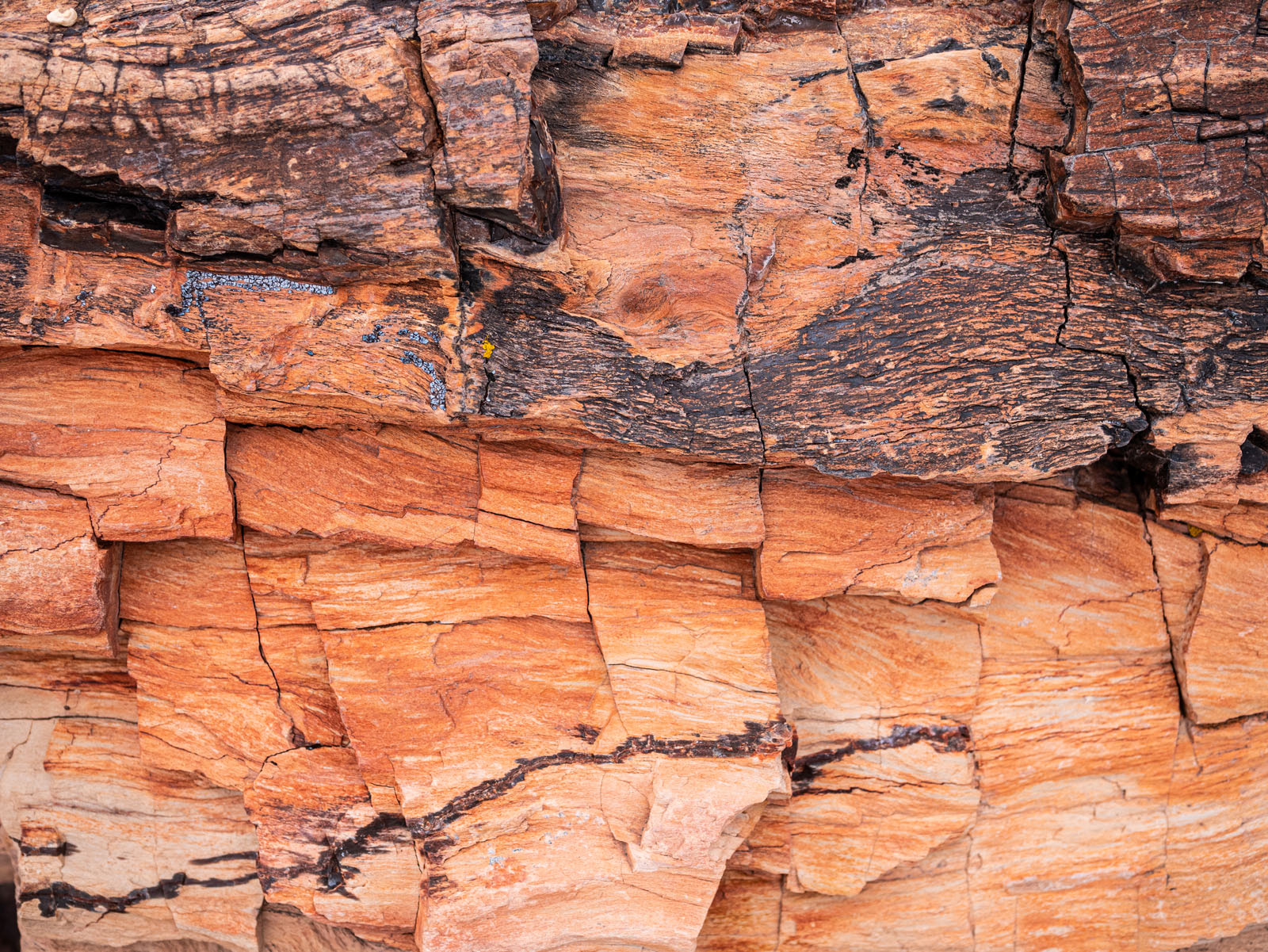 CO_Vacationmoon_PetrifiedWoodMacros-1010522.jpg