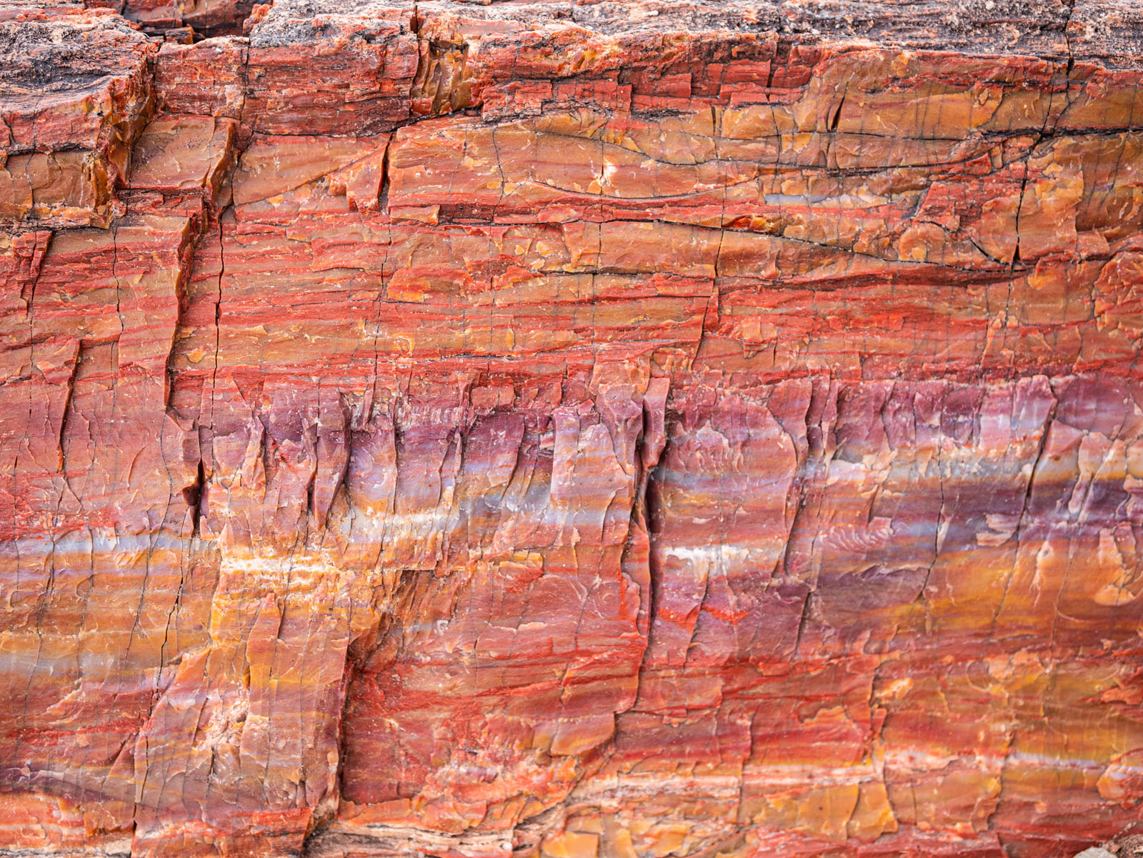 CO_Vacationmoon_PetrifiedWoodMacros-1010525.jpg