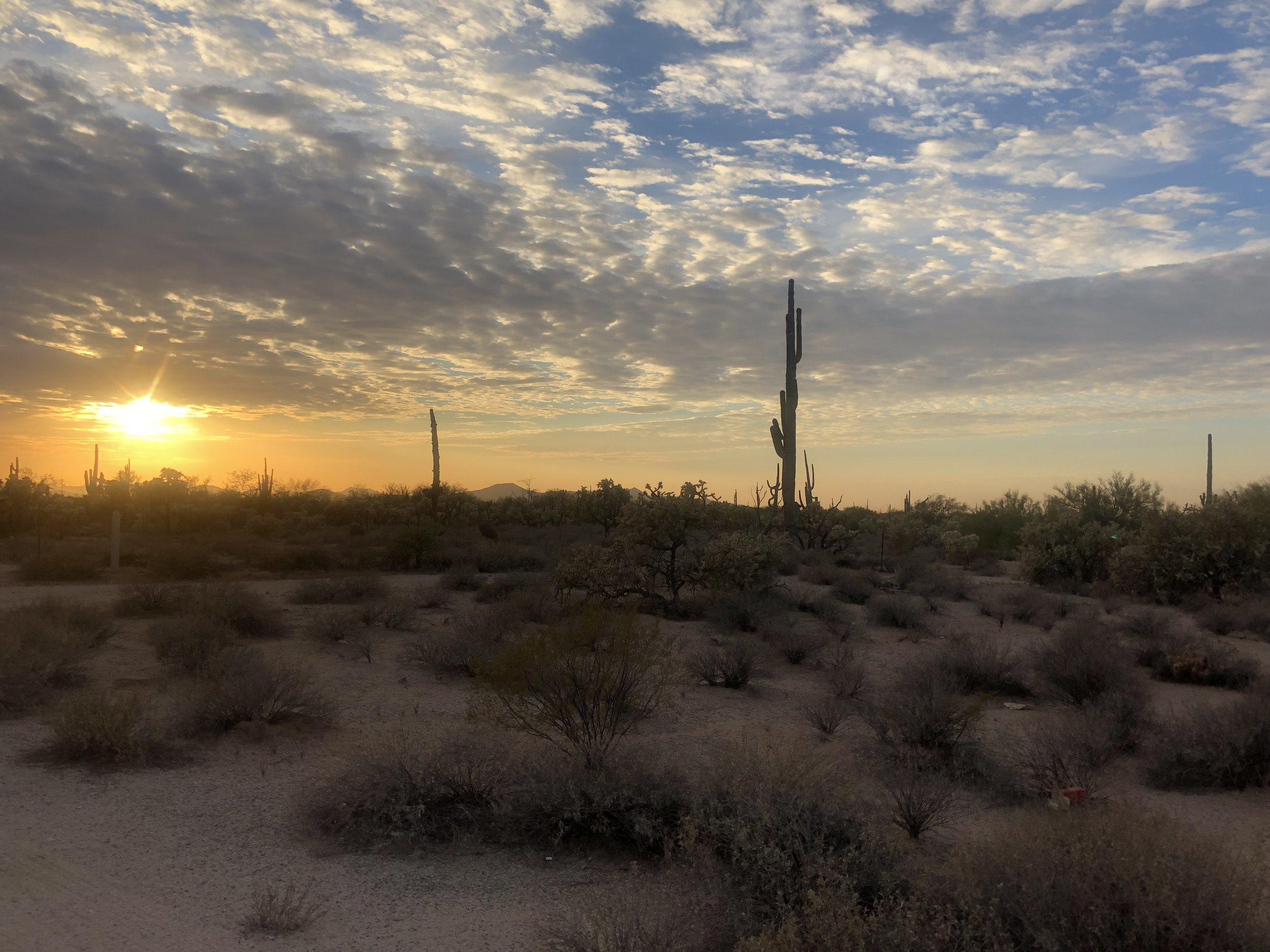 MCSW Desert