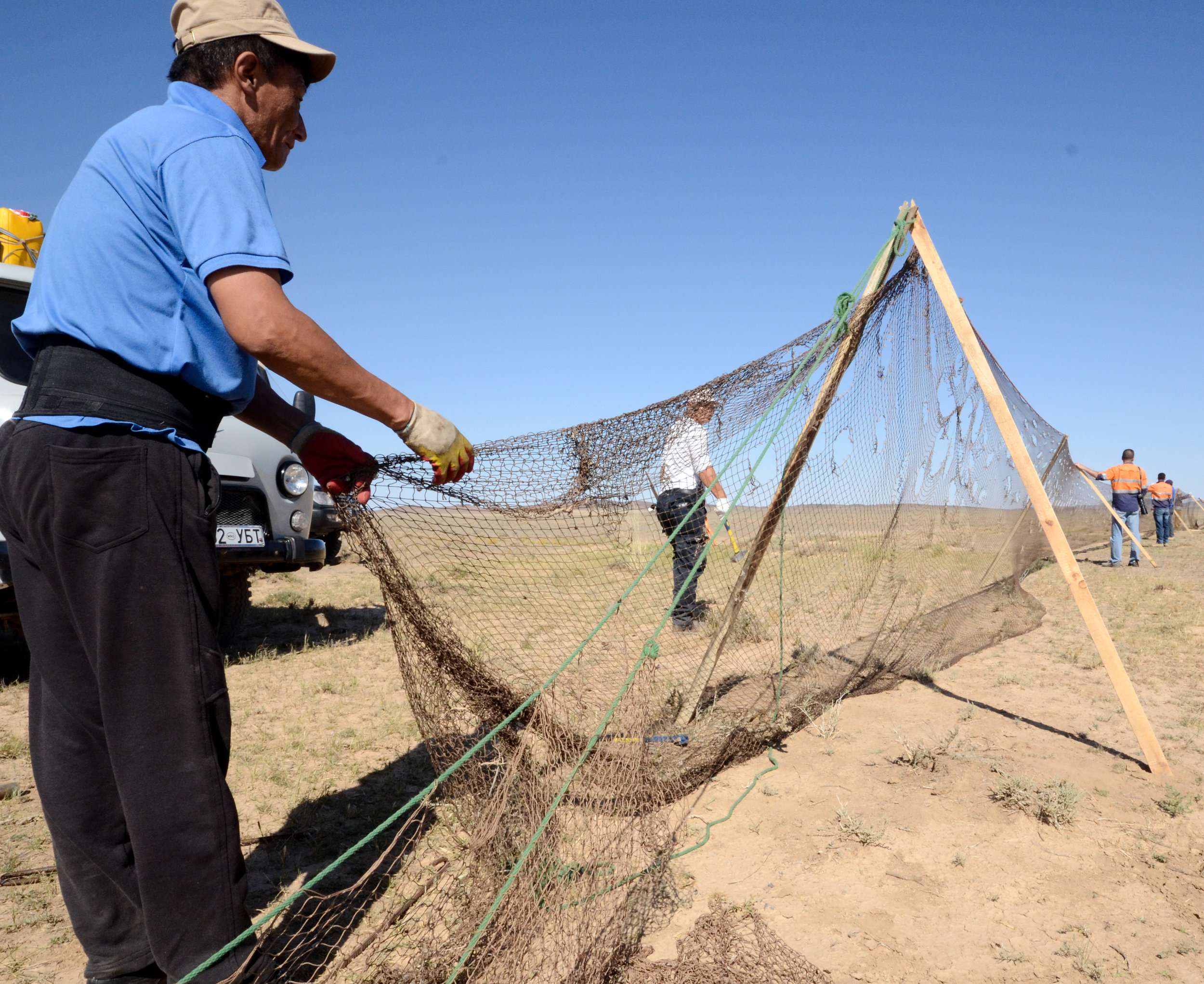 Representatives from Wildlife Conservation Society and Oyu Tolgoi set a drift net to catch and then satellite collar Mongolian Gazelle as part of the Oyu Tolgoi biodiversity monitoring program.