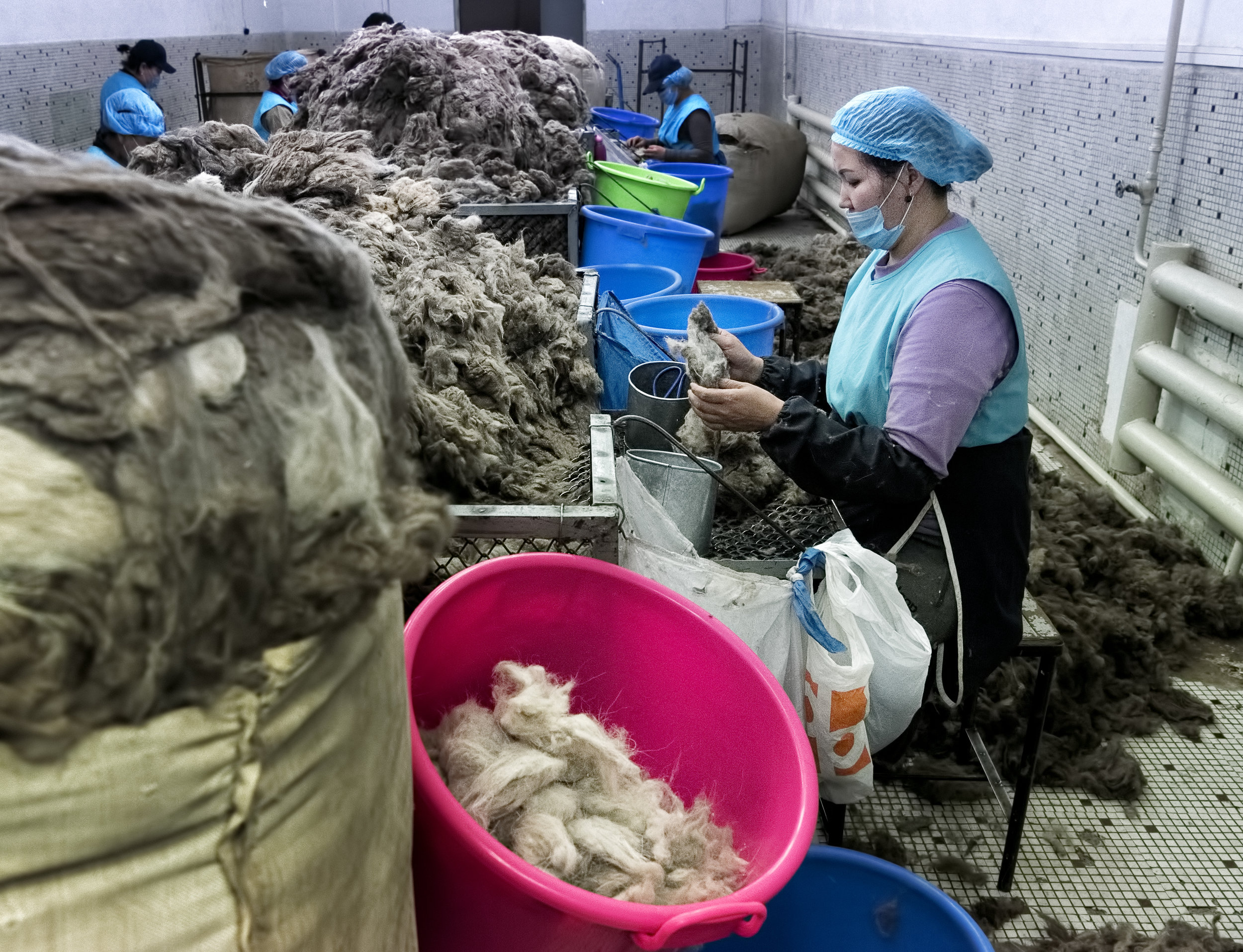 Hand sorting cashmere in an Ulaanbaatar factory