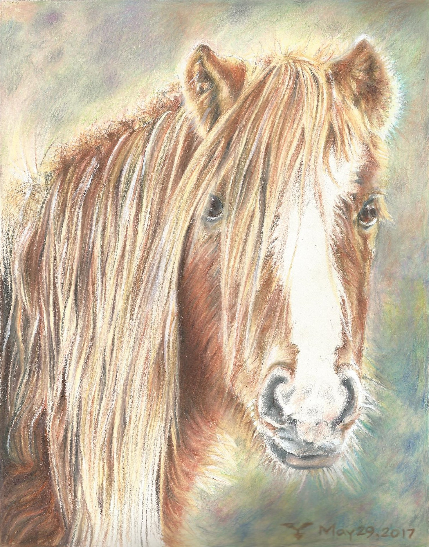 """Icelandic Horse (not pony, lol)"""