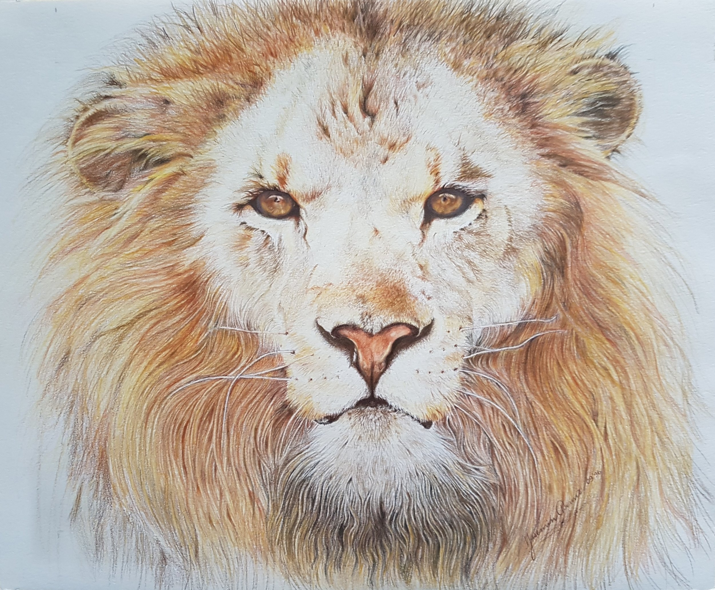 """Leo"", 12 x 15"", $900, Coloured Pencils on Paper"