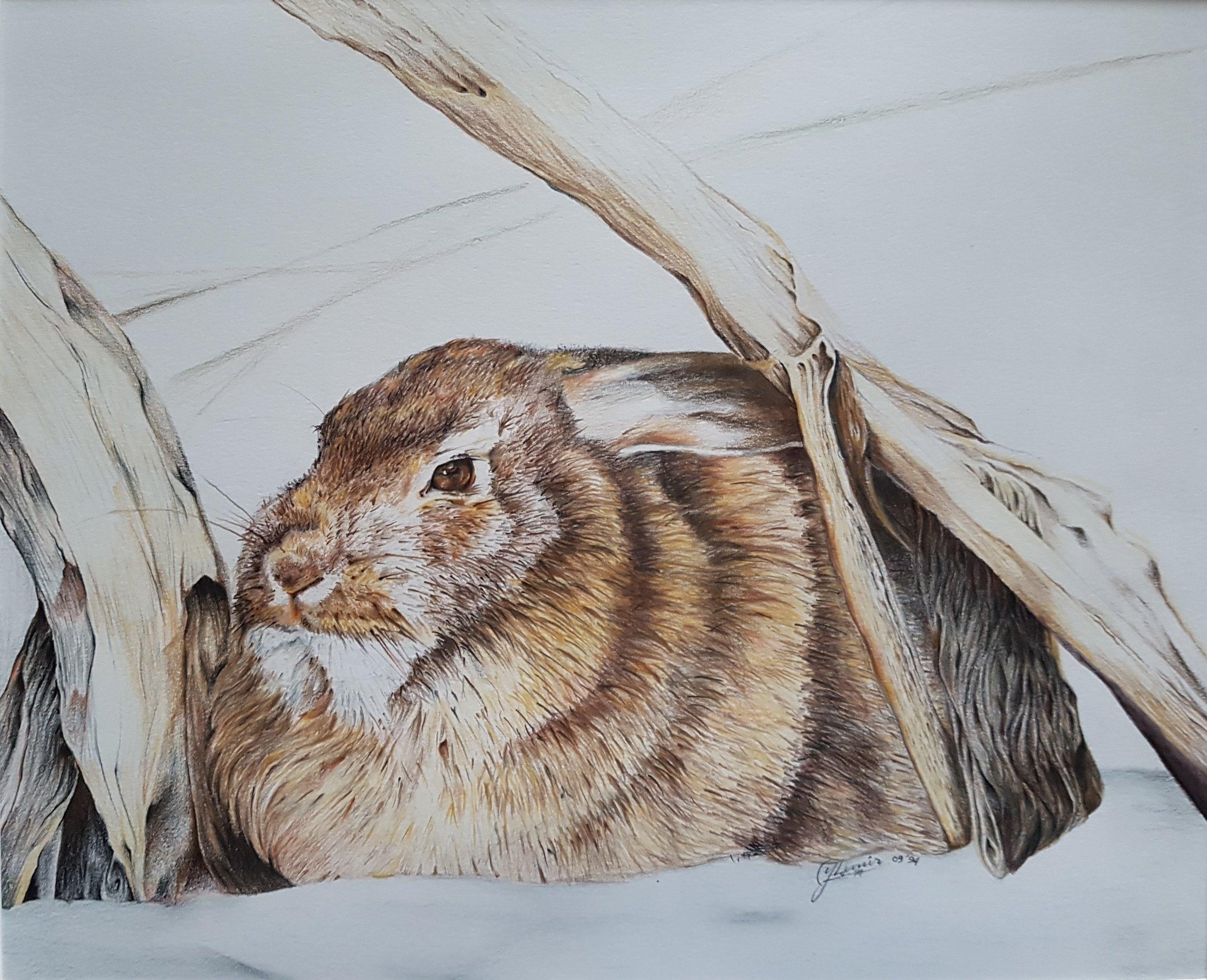 "Rabbit, 13 x 16"", $1040"