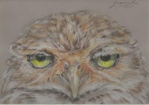 "Owl #8, 4.75 x 6.75"", $160"