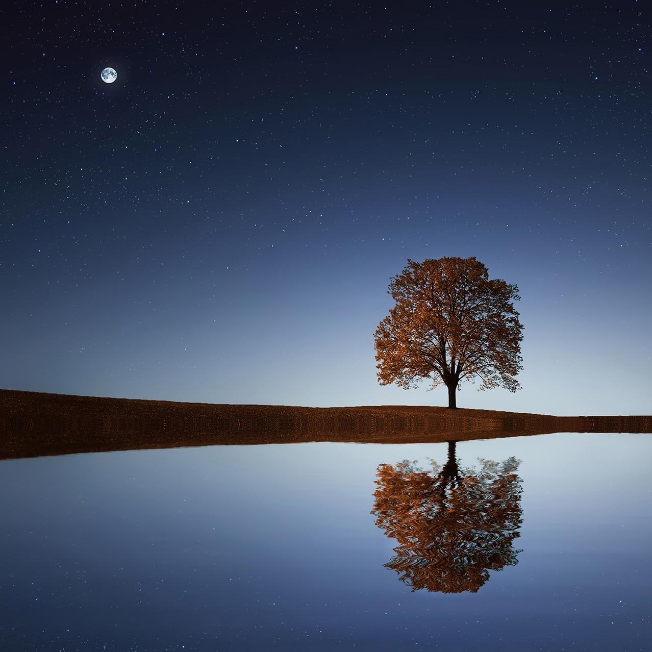tree-lake-moon copy.jpeg