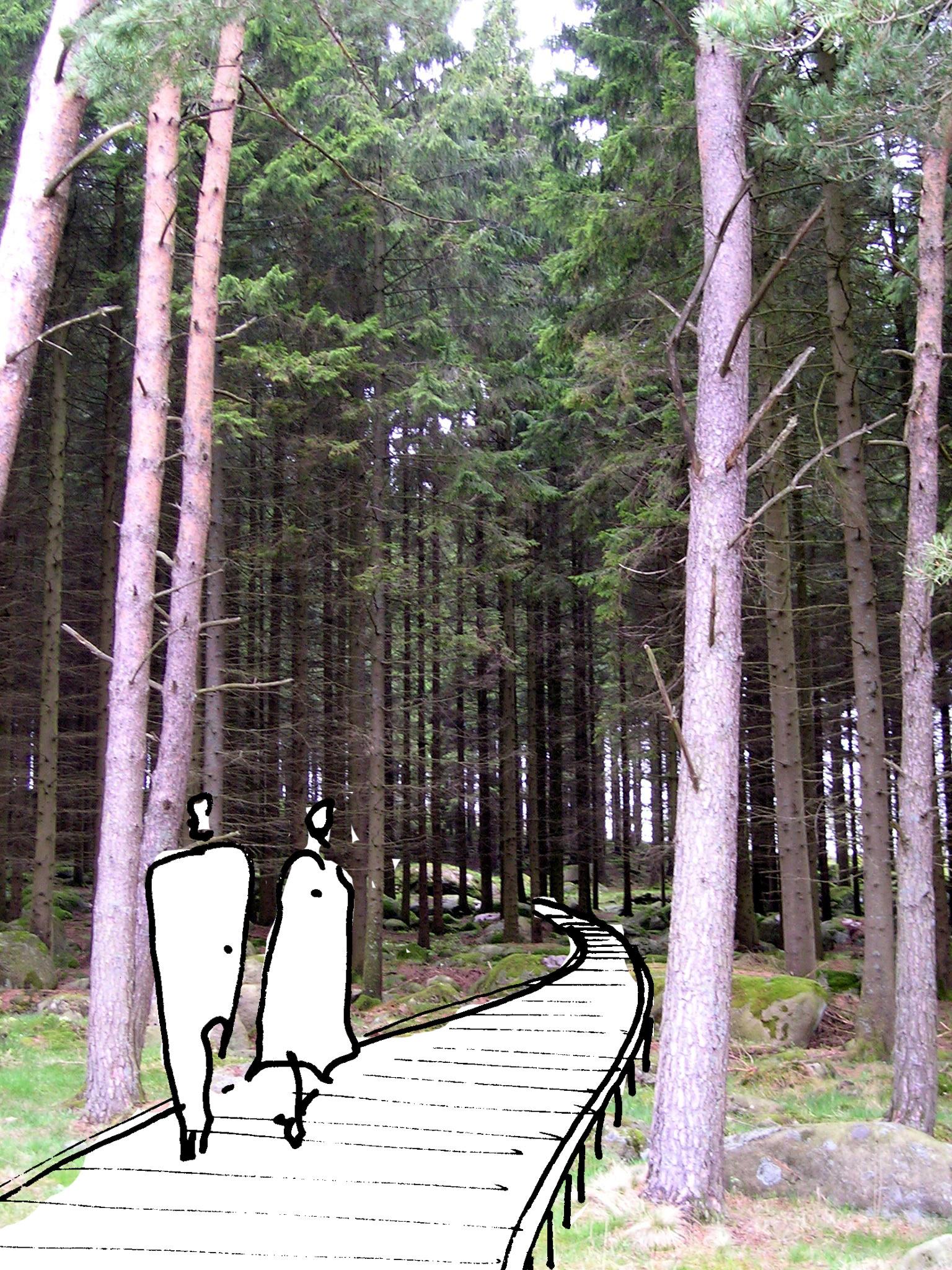 gangvei i skog 01.jpg