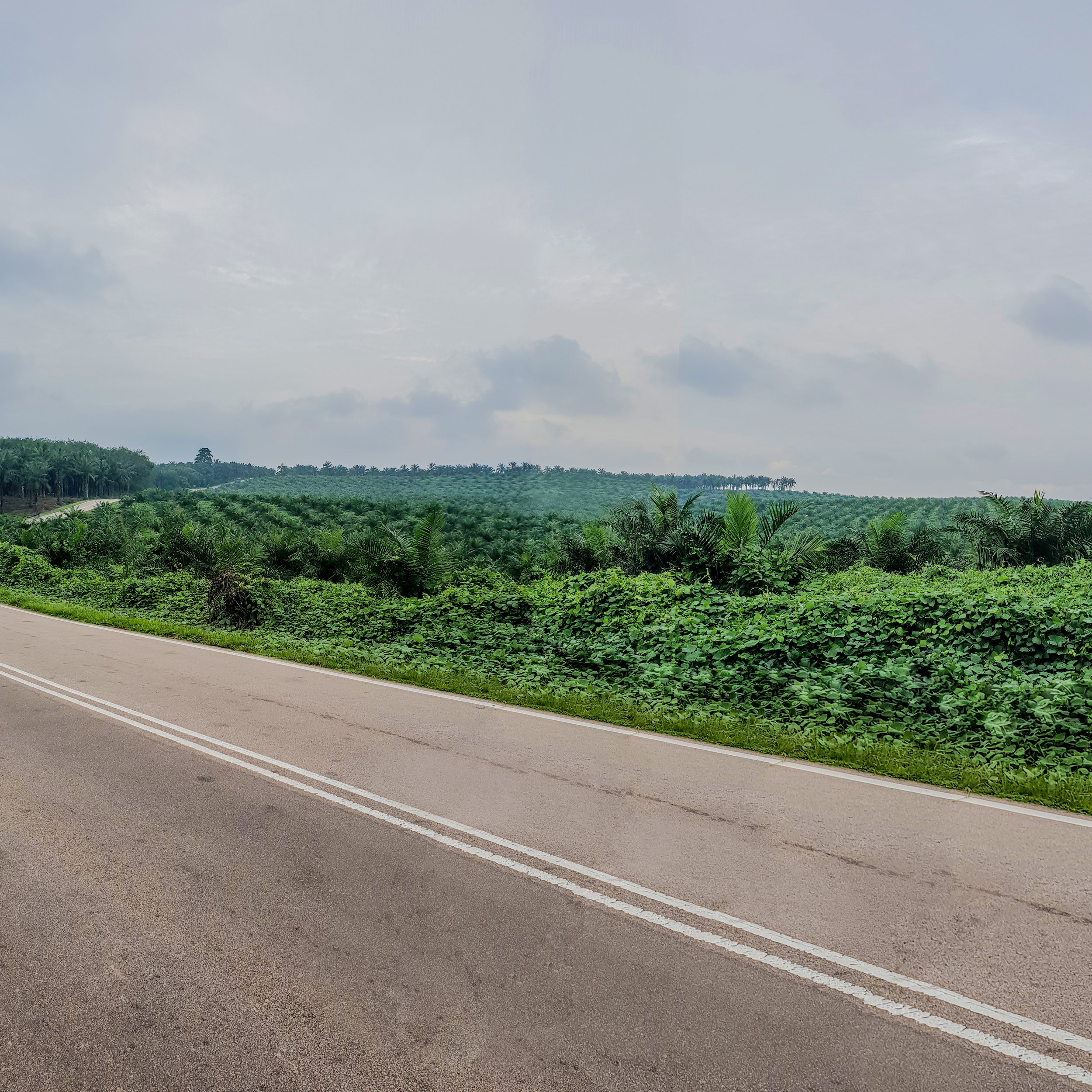 09:16 Part of the winding road and endless plantations. Parts of the journey will be covered in a cooling morning mist (which we did not capture on the way into Paloh) if you set off from Yong Peng as early as we did.