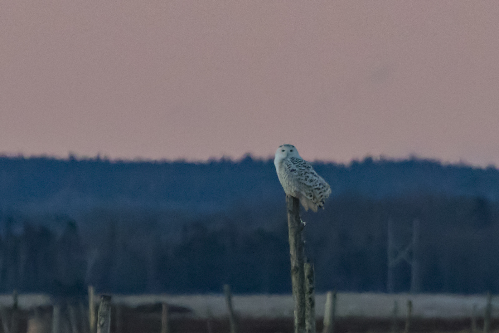 Canon 7D mk II, Canon 100-400mm @ 400mm, 1/800 sec, f/8 and ISO 3200