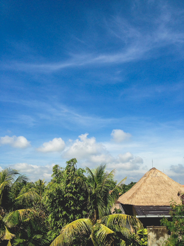 Bali Ubud landscape