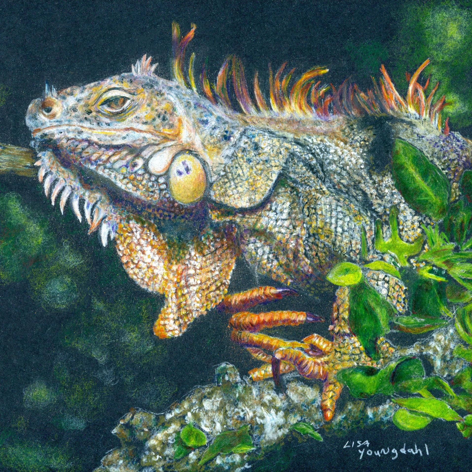 IguanaRescan002.jpg