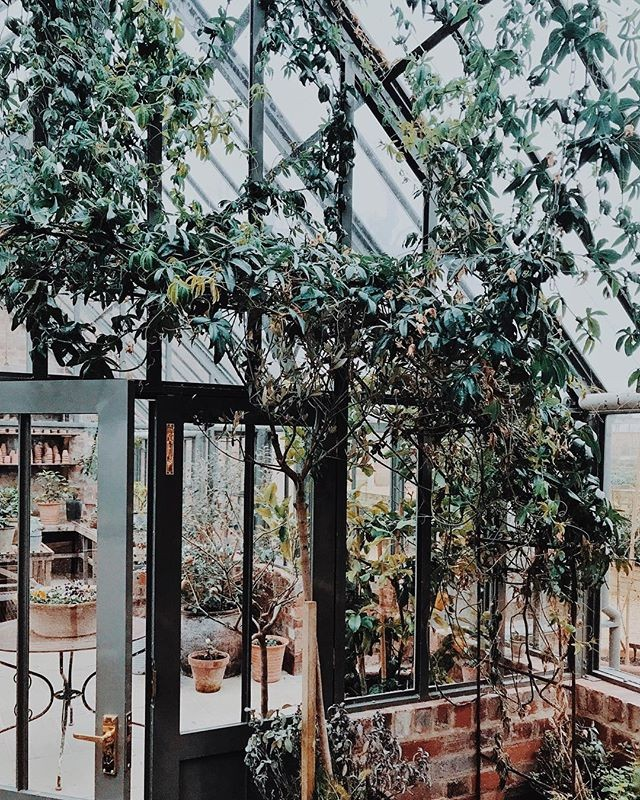Things that made me happy today: Finding this greenhouse, have a nosey around, touch plants. The usual. 🌿 #happyisclose #letjoyblossom 📷 @nadiameli . . . . . #blossomedco #blossomed #flowerdesign #flowerlove #bloom #wildatheart #letyoursoulshine #flowers #flowerstagram #gardenlife #wanderlust #buylocal #naturelover #nycflorist #weddingflowers #nyc #flowerschool #wildflowers #allgoodthingsarewildandfree #staywild #flowerlove #flowerpower #blooms #farmflowers #flowermagic