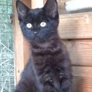 Jemima - Adopted Sept 17