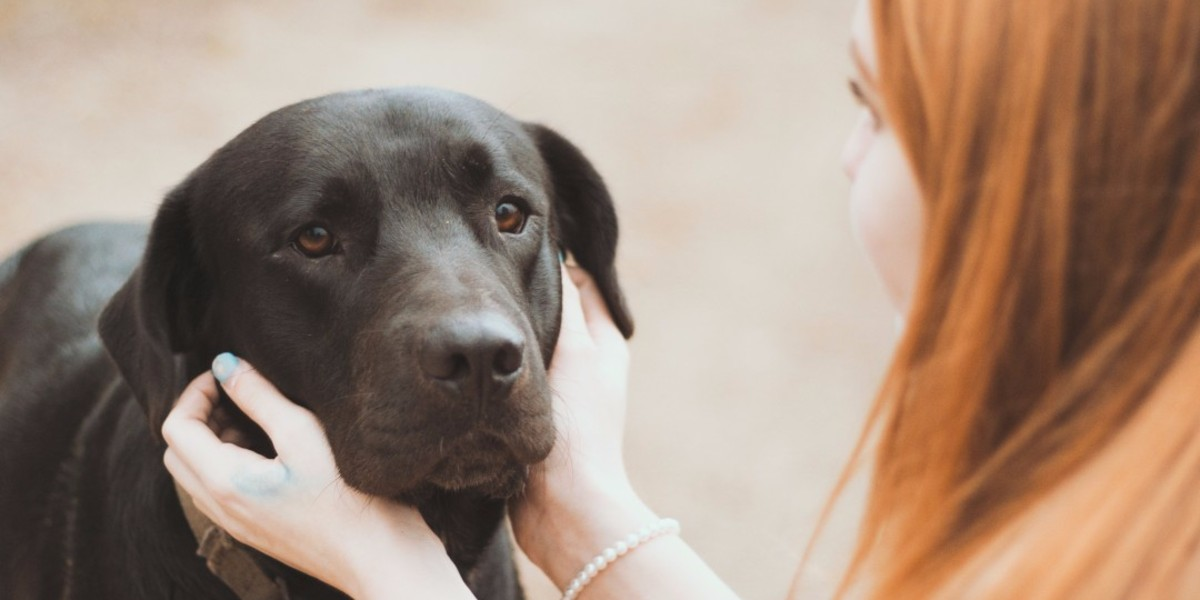 Dog adoption policy - All you need to know before applying to adopt a dog