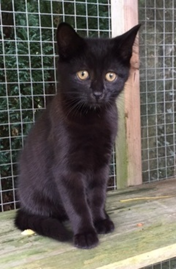 Benjamin - Adopted Sept 17
