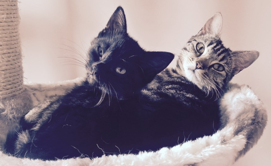 Daisy and Charlie - Adopted Oct 17