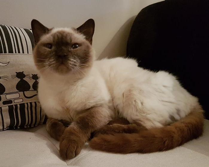 Saffy - Adopted Oct 17