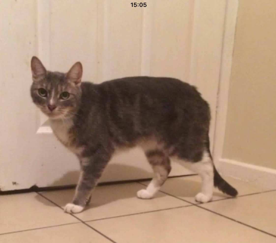 Milo - Adopted Dec 17