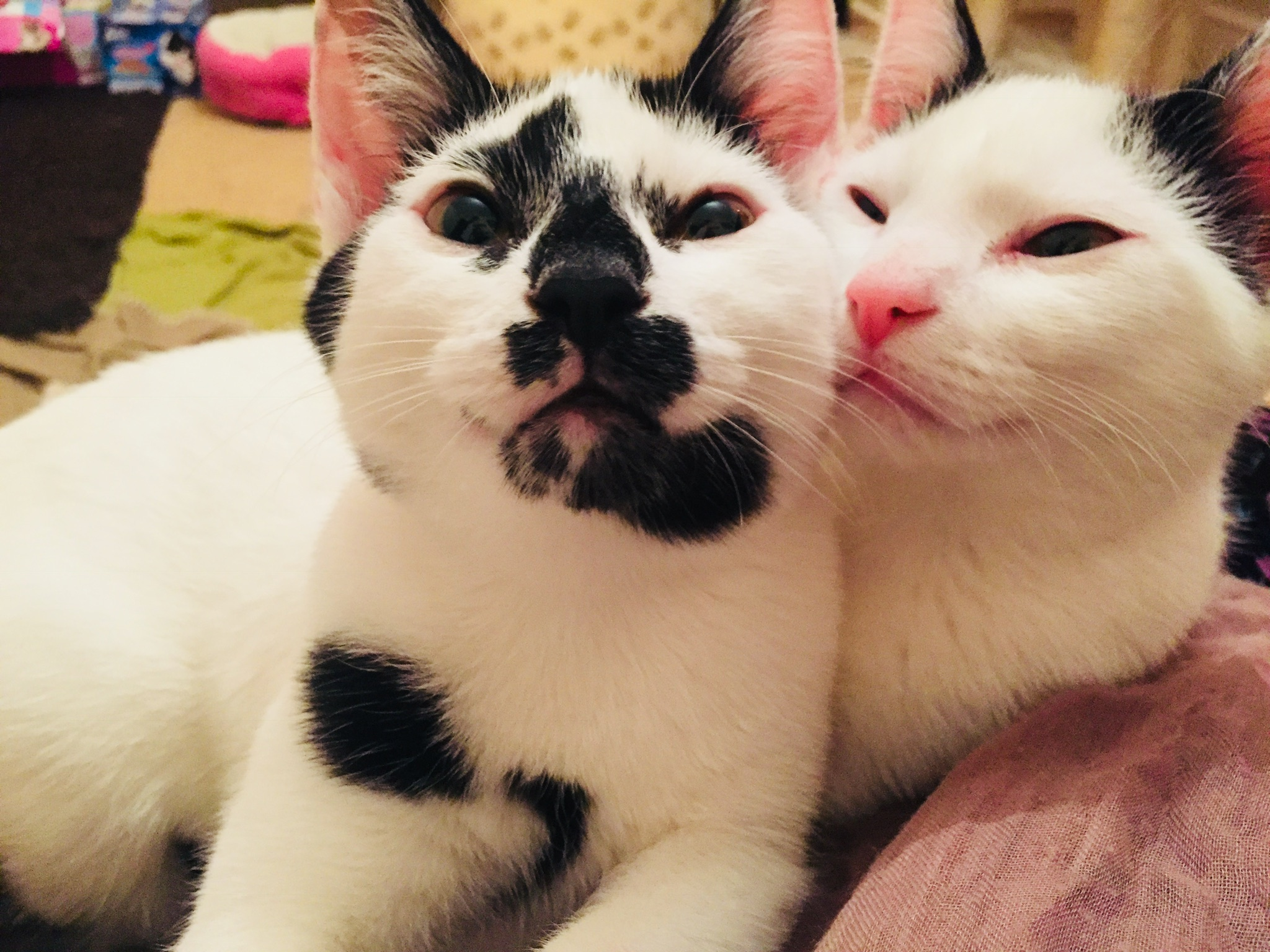 Patch & Snowflake - Adopted Dec 17