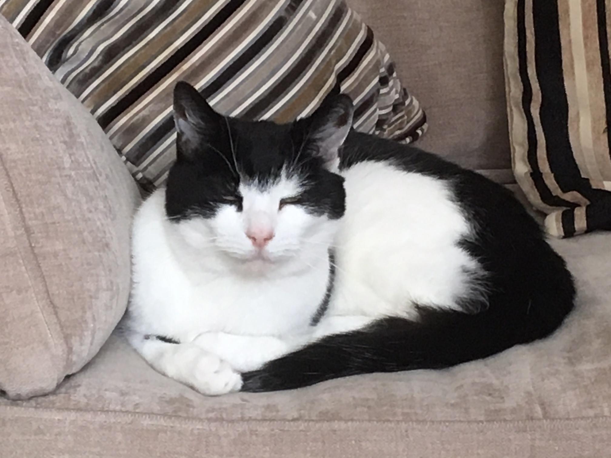 Oscar - Adopted May 17
