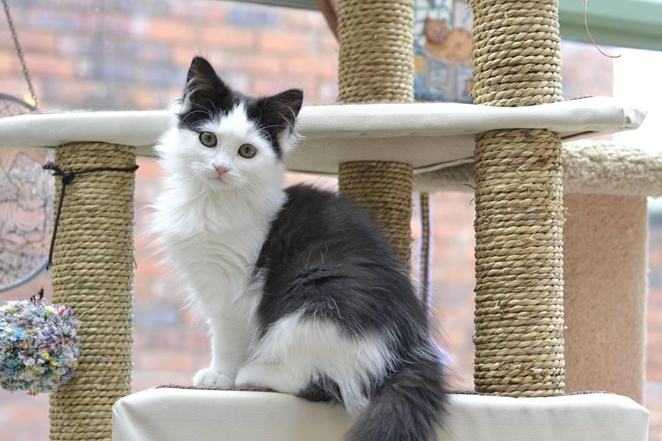 Lurleen - Adopted April 17