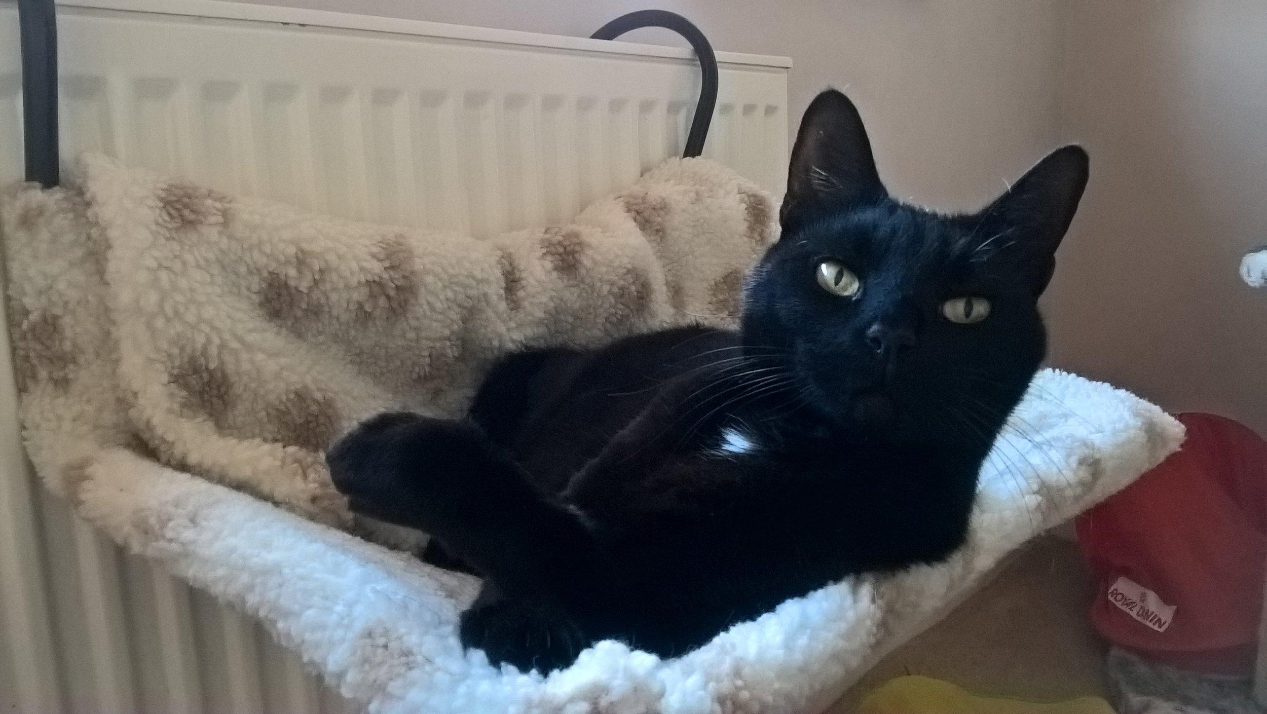 Minnie - Adopted Feb 17