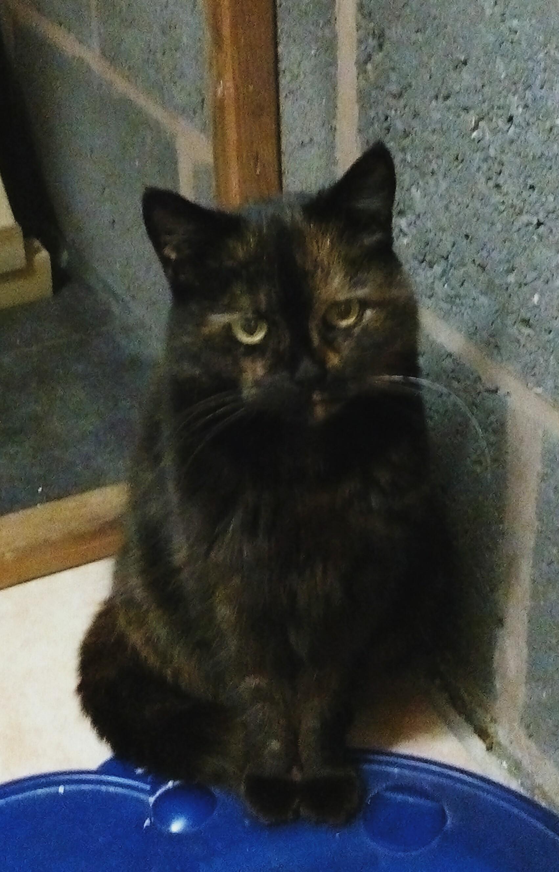 Peppi - Adopted Jan 18