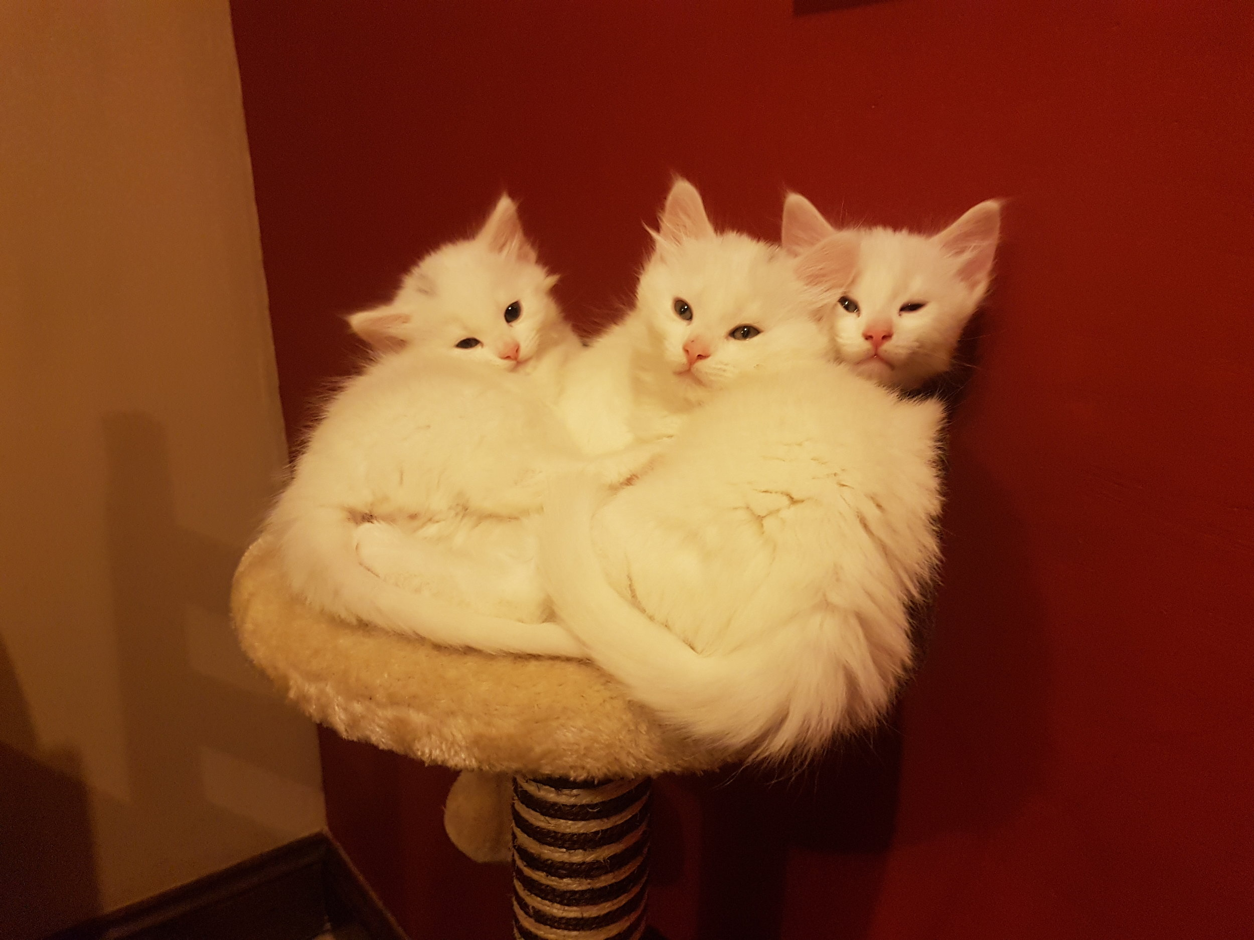 Leo, Lennon and Lewis - Adopted Jan 18