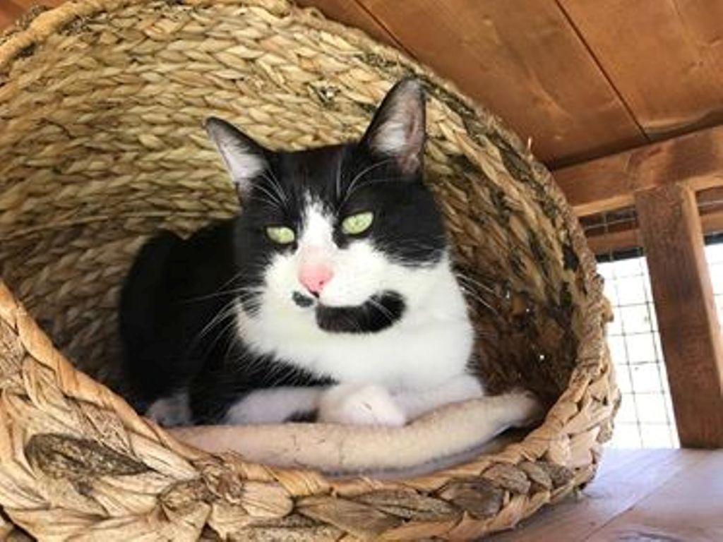 Winston - Adopted May 18