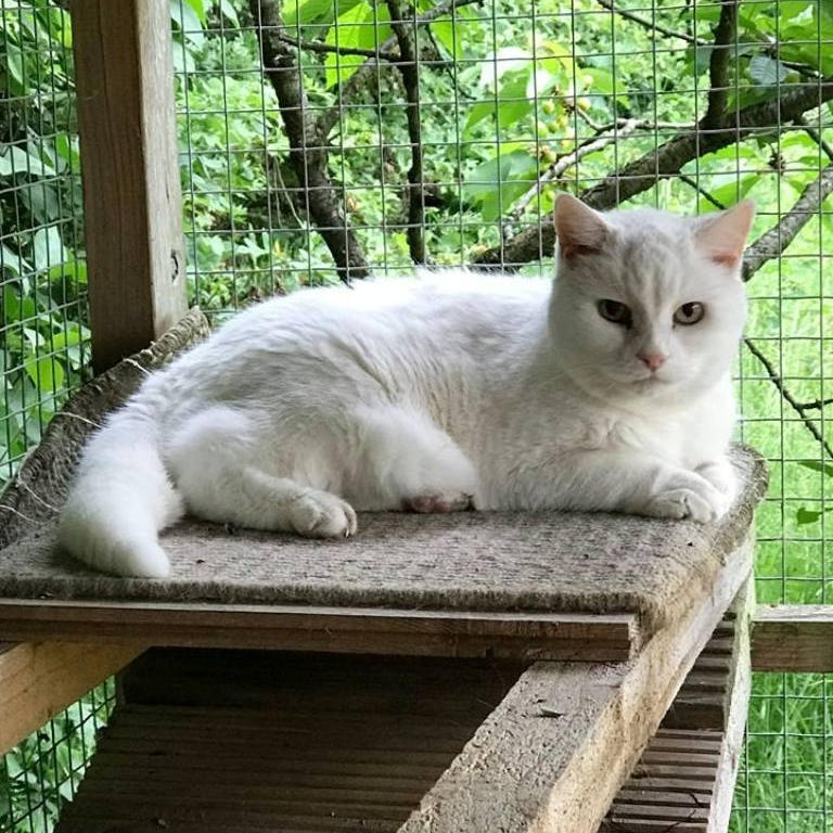 Blanche - Adopted July 18